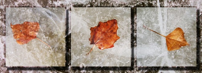 Leaves On Ice by Betty Calvert